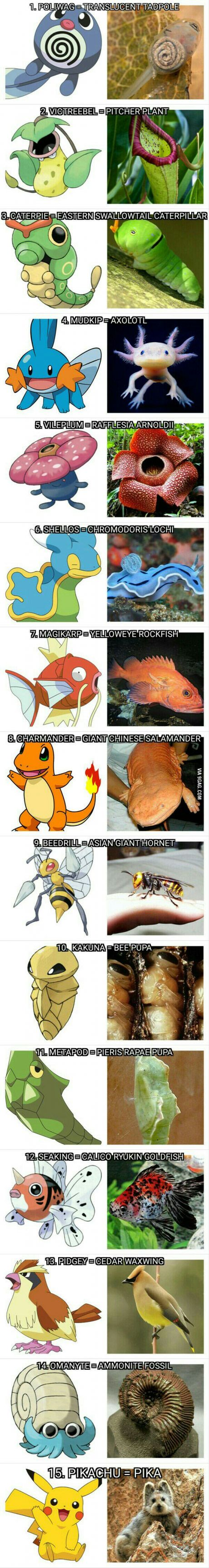 15 Pokémon And Their Real-Life Equivalent, Time to catch em all.!