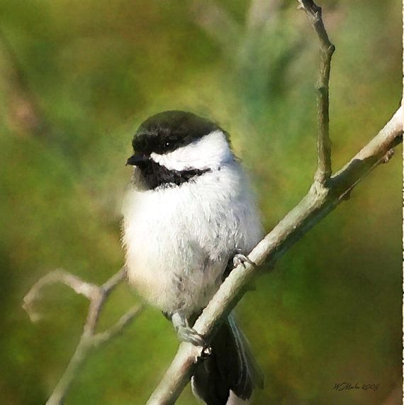 Resting Chickadee painting, wildlife painting, bird, wall decor, digital painting, Chickadee. $20.00, via Etsy.