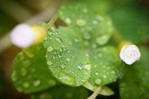 オキザリスです  世界中に800種類以上あるといわれている神秘的な品種 昼間は咲いていたオキザリスも夜には花びらを閉じてしまいました オキザリスも生きてるんだな〜と実感 #オキザリス #800種類 #白い花 #105mm #マクロ撮影  #三軒茶屋 #食べ歩き #美味 #東京グルメ #イタリアン #レストラン #ペペロッソ #ランチ #贅沢ランチ #パスタランチ #昼飲み #ディナー #パスタ #手打ちパスタ #クラフトビール #ビール #ワイン #イタリアワイン #イタリアンレストラン #italianfood #グルメ #郷土料理 #世田谷線 #下北沢 #渋谷   | 三軒茶屋のイタリアン「ペペロッソ(PepeRosso)」(パスタ・郷土料理・ワイン)