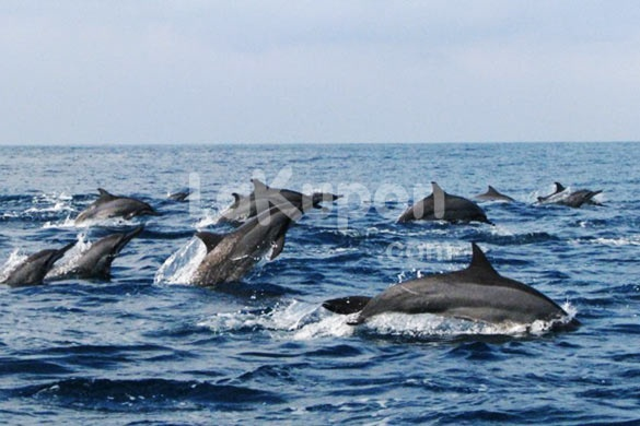 [28% Off] Unforgettable Holiday Experience! 3D/2N Come and Meet the Dolphins in Kiluan Bay Only Rp 859.000,-/person