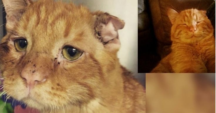 The sad looking cat, Benben, was discovered by someone from Canada's BCSPCA and immediately taken to the emergency vet clinic.