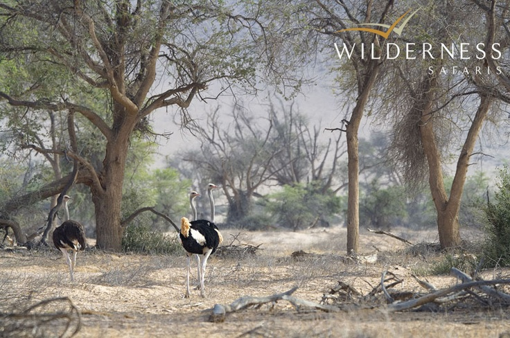Doro Nawas Camp - Birdlife is excellent with several Namibian endemics, such as Damara Hornbill, Carp's Tit and Rüpell's Korhaan. #Safari #Africa #Namibia #WildernessSafaris