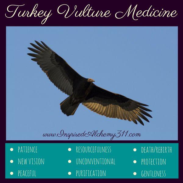 Turkey Vulture Medicine
