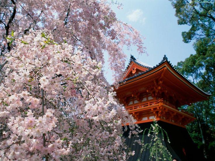 Как хорошо, Когда, на рассвете проснувшись, Выглянешь в сад — И увидишь вдруг, что бутоны превратились в цветы на вишне.  Татибана Акэми (1812 – 1868, настоящее имя – Сёгэн Госабуро)