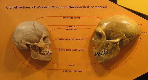 ネアンデルタール人 - Wikipedia