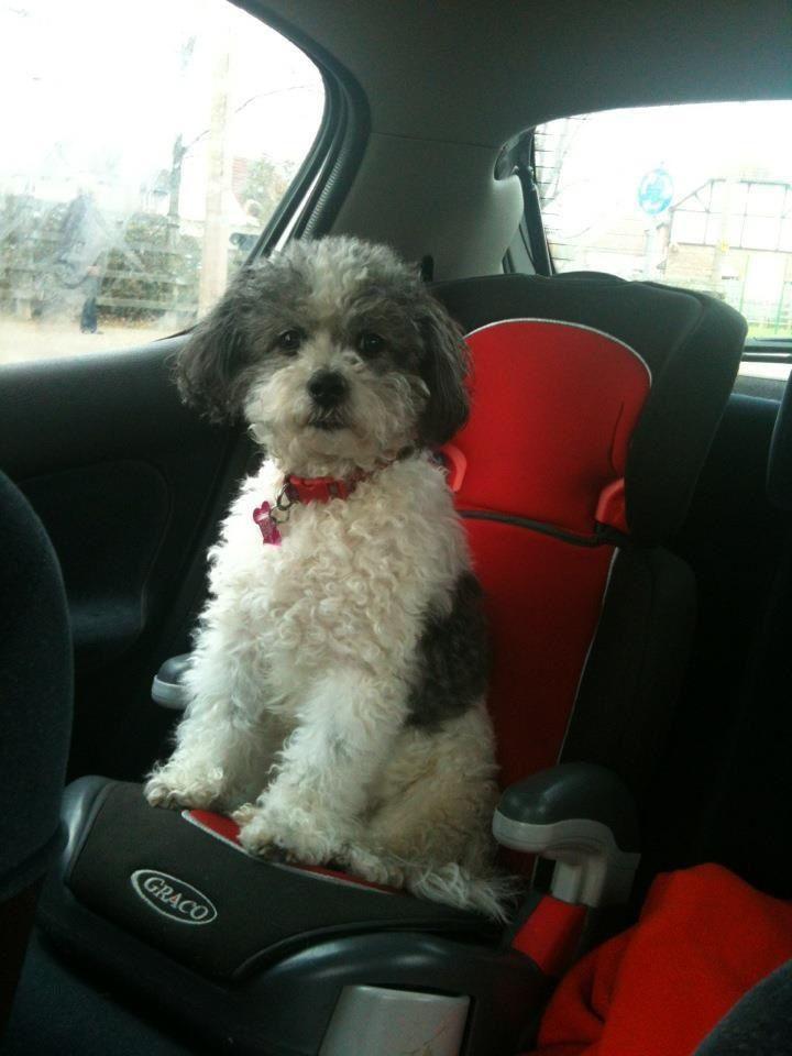 Always where your seatbelt