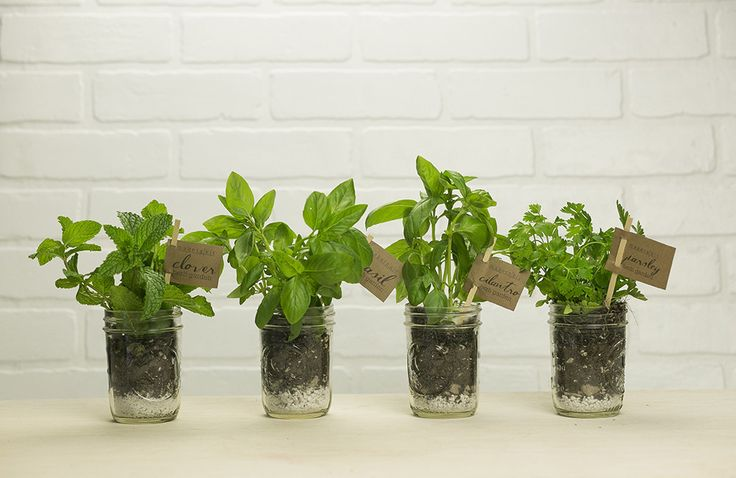Makerskit Diy Mason Jar Garden Kit For Your Green Thumb Genius Friends And Family Now They