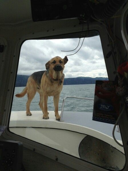 Oh the life of a boat dog
