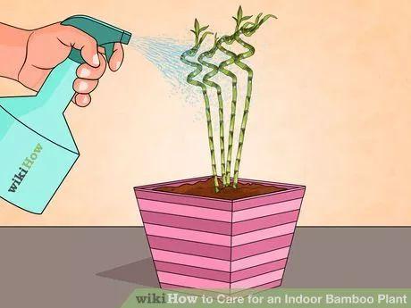how to grow bamboo tree