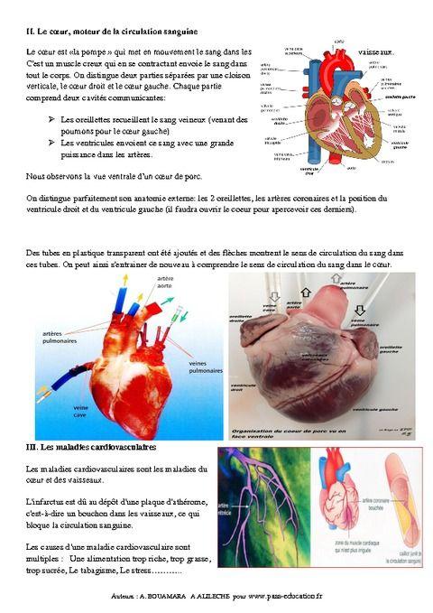 Rôle de la circulation sanguine dans le fonctionnement de l'organisme – 5ème – Cours – SVT - Pass Education