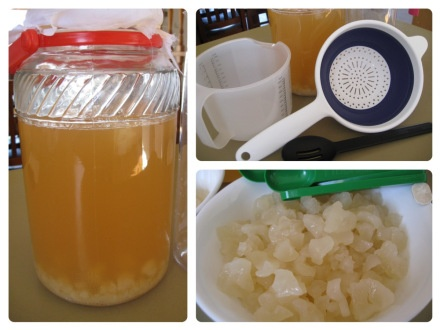 Water kefir – natural probiotics for a healthy digestive system – Living for life