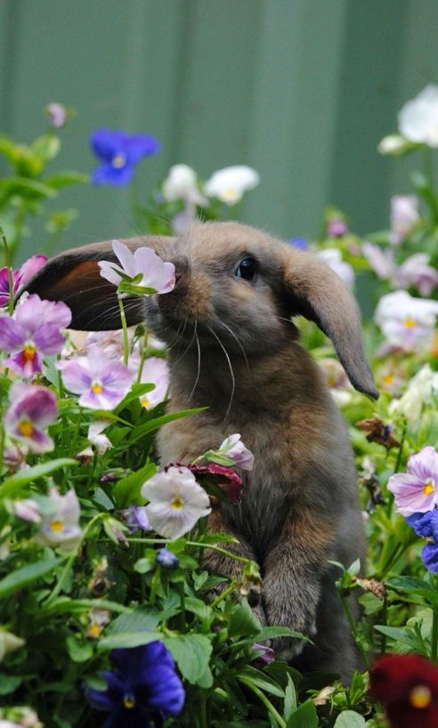 Bunny smelling the flowers! ~ I'm afraid our wild bunnies don't fare too good around here. We have 3 cats.