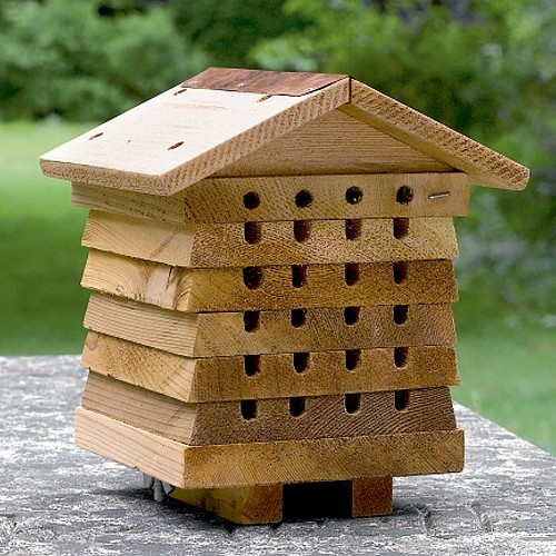 Solitary Bee House Plans The Best Bee Of 2018