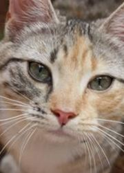 """""""Freckle"""" one of the beautiful clinic cats who keep us entertained on a daily basis."""