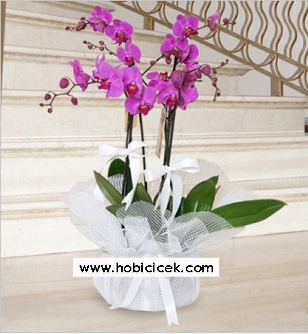 3 Dallı Pembe Orkide