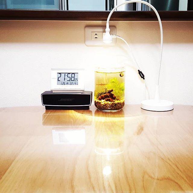 【takeshi_suu】さんのInstagramをピンしています。 《ー  ダイニングテーブルの リセット(整理整頓⁉)と 言うのを やってみました!  と言いますか💡  引っ越してから 初めて 「ボトルアクアリウム」に チャレンジしていて 最近安定しています。 皆元気です❕  餌は子供👧があげて 僕は朝と夜と ご飯を食べながら  アカヒレ(メダカ) ミナミヌマエビ(5匹) 石巻貝 マツモ(水草) ブクブク(泡のやつね)を 観察しています。  なかなか飽きません☺  水槽は小さいですが それがまた良くて 食卓にシンプルに ボトルだけあるので ちょっと優雅な感じです。 (ブクブクの機械やライトのタイマーは机の下をDIYして隠してあります)  費用もビンとかDAISOで 100円で売ってますし ブクブクも1000円ちょっと。 全てで2000円強くらいで 子供と観察できるので Good👍です。  横のBOSEのスピーカーも クリスマスの12月は 気分によって夜ご飯に Wi-FiでYou Tubeから クリスマスBGMを選んで Bluetoothで飛ばすので 無料で…
