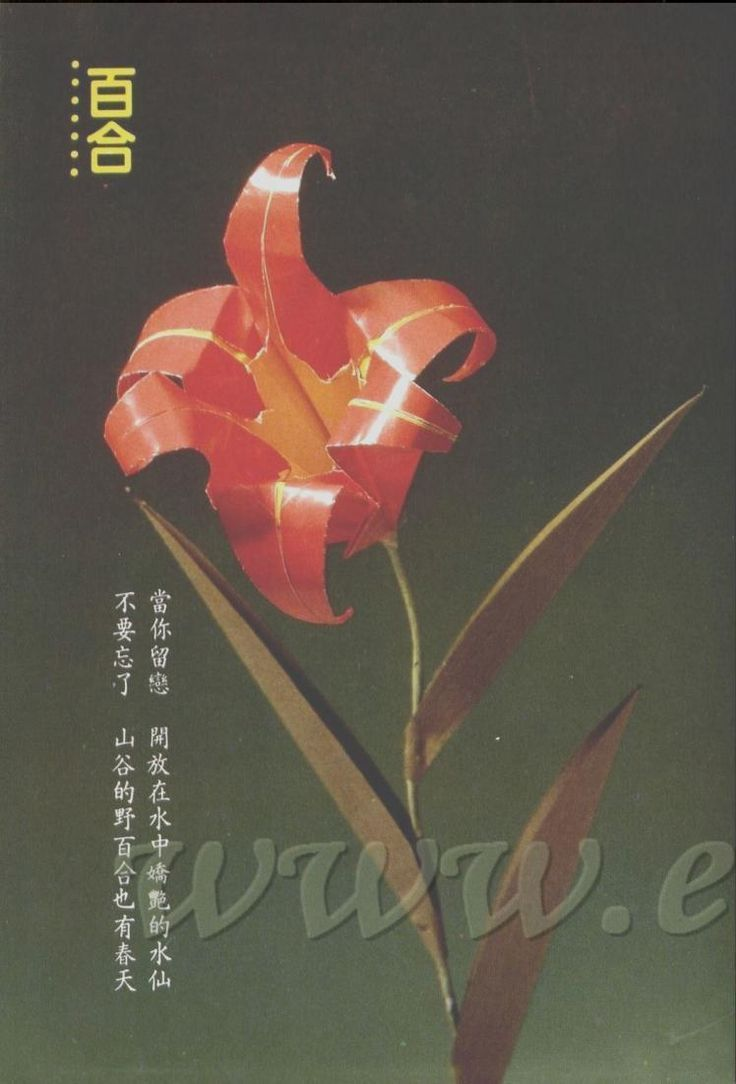 #ClippedOnIssuu from Livro origami 03