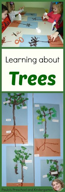 Learning about trees (and more!) for the letter T