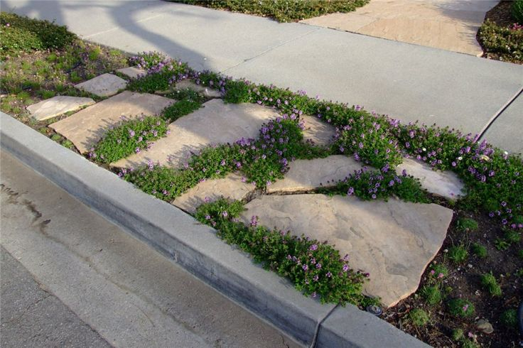 Duh.  I can do pavers in my parking strip!  With that cute creeping purple flower.  Totally cute.