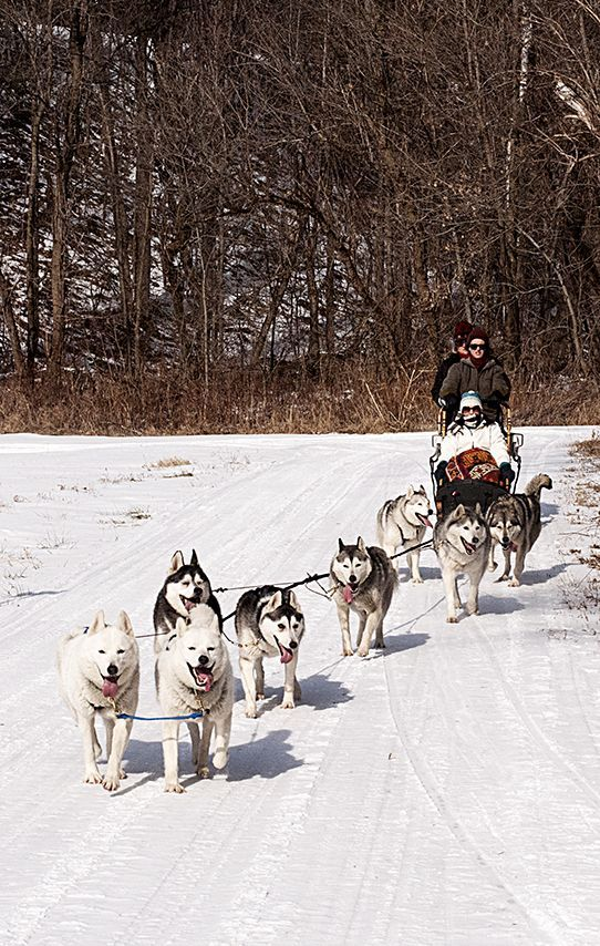 Dog sledding in Vermont.