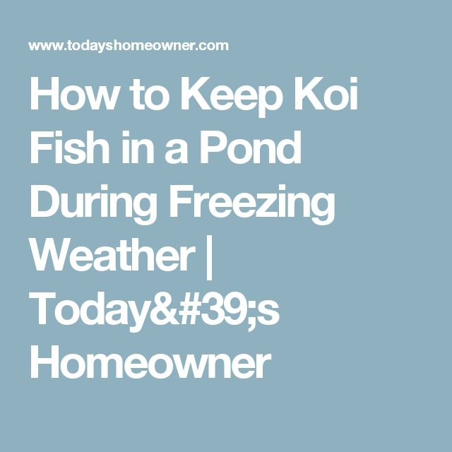 25 Best Ideas About Koi Fish Pond On Pinterest