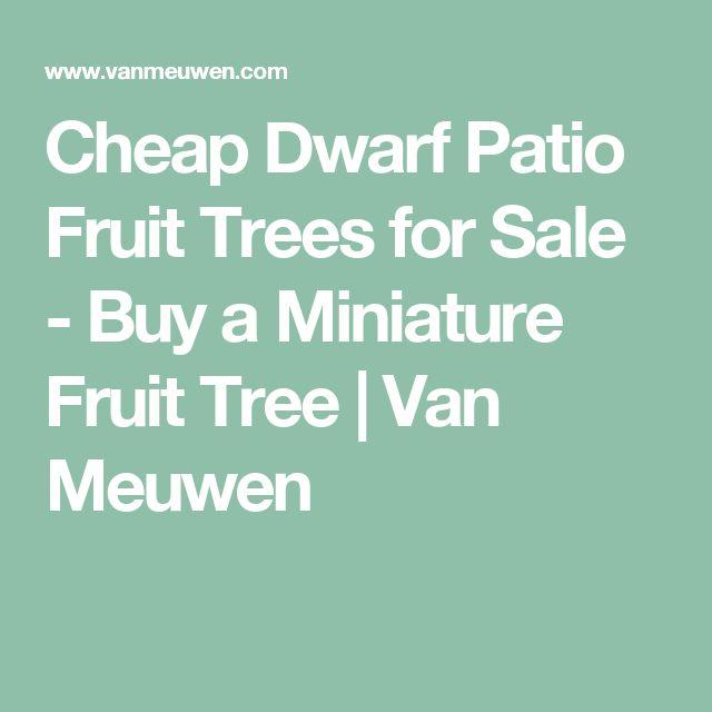 Cheap Dwarf Patio Fruit Trees for Sale - Buy a Miniature Fruit Tree | Van Meuwen
