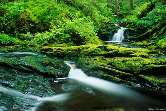 Tongass National Forest | Waydelich Creek, Tongass National Forest, photo