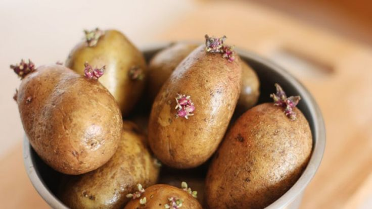 Glycoalkaloids, also found in nightshade, can be found in the leaves, stems, and sprouts of potatoes.