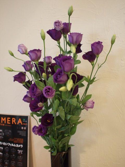 日々のAさんが花を持って来店してくださいました。  とても素敵なトルコキキョウです。  それから週...