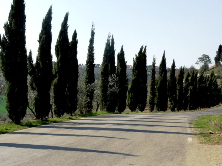 On the Road to Tignano - Photo by Bianca Corti