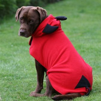 Buy your dog Halloween costumes today , for all sized dogs. Even Big Dogs  like to join in the fun and now they can with our selection of