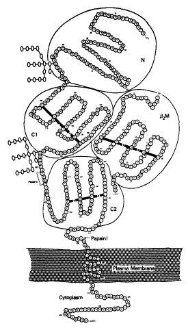 Honors biology book report
