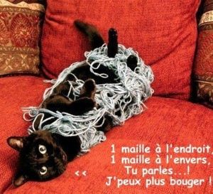 Photos animaux droles...humour chiens et chats..