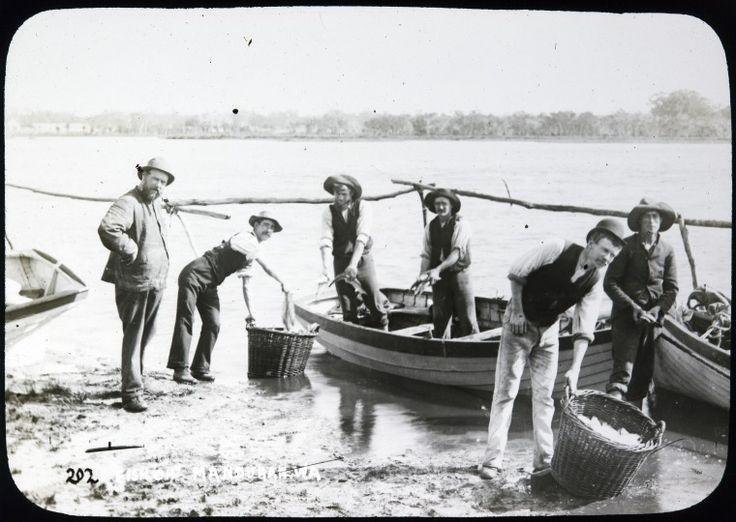 090734PD: Fish off Mandurah, W.A.   http://encore.slwa.wa.gov.au/iii/encore/record/C__Rb2161177__S090734pd__Orightresult__U__X3?lang=eng&suite=def
