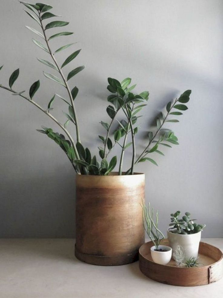 Best 21 traditional walls inspiration by fap ceramiche images on pinterest other - Beautiful house plants ...
