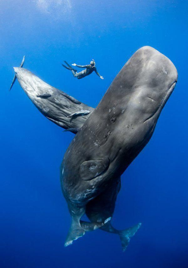 Whale of a time...