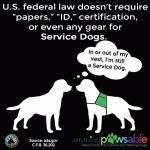 10 Things Service Dog Handlers Want You to Know - Anything PawsableAnything Pawsable