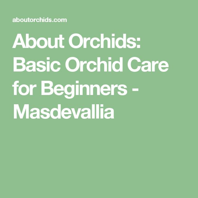About Orchids: Basic Orchid Care for Beginners - Masdevallia