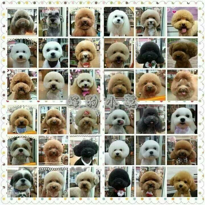 Japanese dog grooming faces
