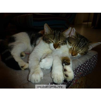 #194172 chat trouvé à COUDROY | chat-perdu