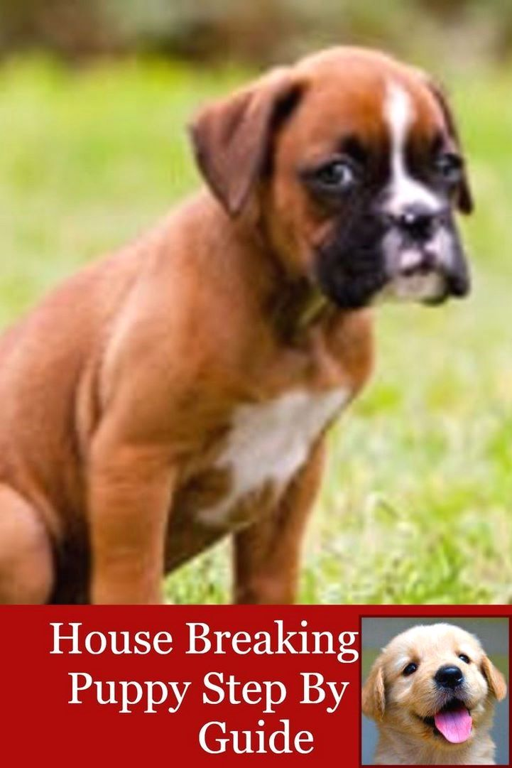House Training A Maltese Puppy And Dog Behavior Changes