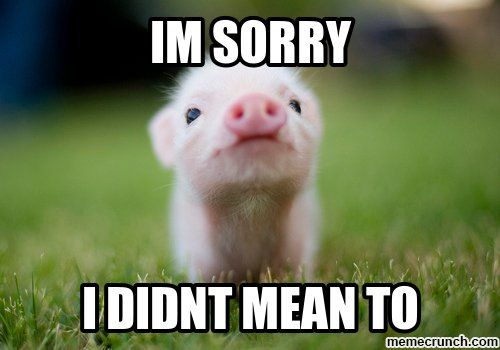 Best 21 I M Sorry Memes Baby Animals Pictures Baby Pigs Baby Animals