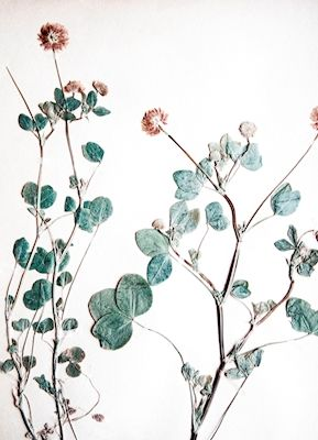 Vintage looking photograph of dried and pressed flowers from 1940. Available as poster at printler.com, the marketplace for photo art. Photographer Lisa Holmgren