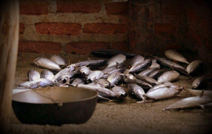 Documental #Tagangueros. La pesca, tradición ancestral de un pueblo consagrado al mar, a la labor y al alimento.  Coproducción de #PNK @Systema Solar y #AsociaciónDeChinchorrerosDeTaganga.