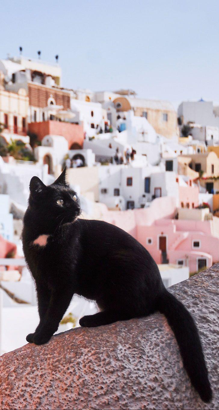 Santorini , Greece - The Cat's Whiskers