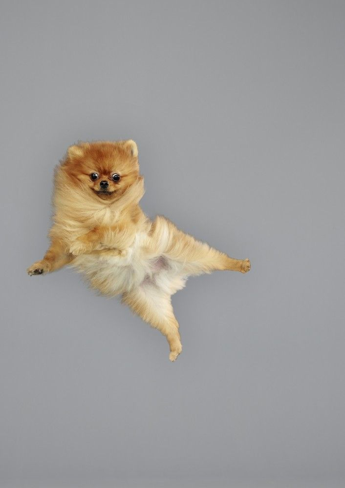 (Saving...) 'Flying Dog' Photos Capture Furry Friends In Freefall