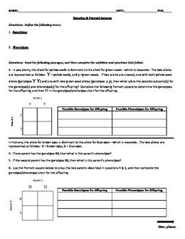 genetics punnett squares worksheet activities student and the o 39 jays. Black Bedroom Furniture Sets. Home Design Ideas