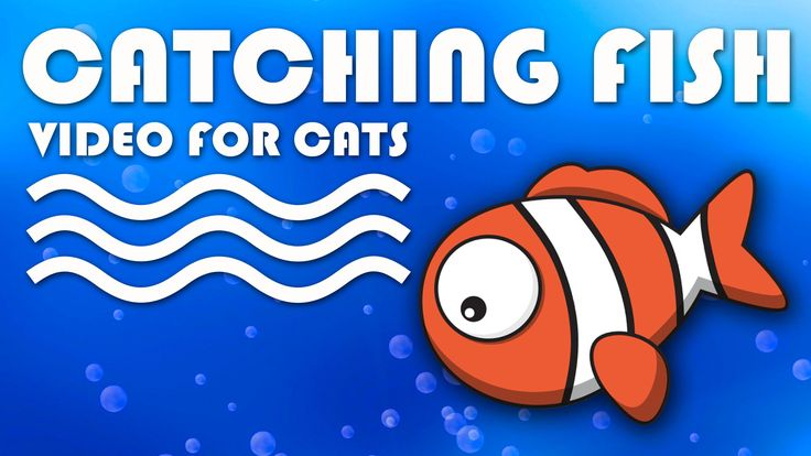 ENTERTAINMENT VIDEO FOR CATS. Catching a Cute Fish  Screensaver Video for Cats. Video for cats to watch. More Videos for Cats: http://www.tvbini.com/