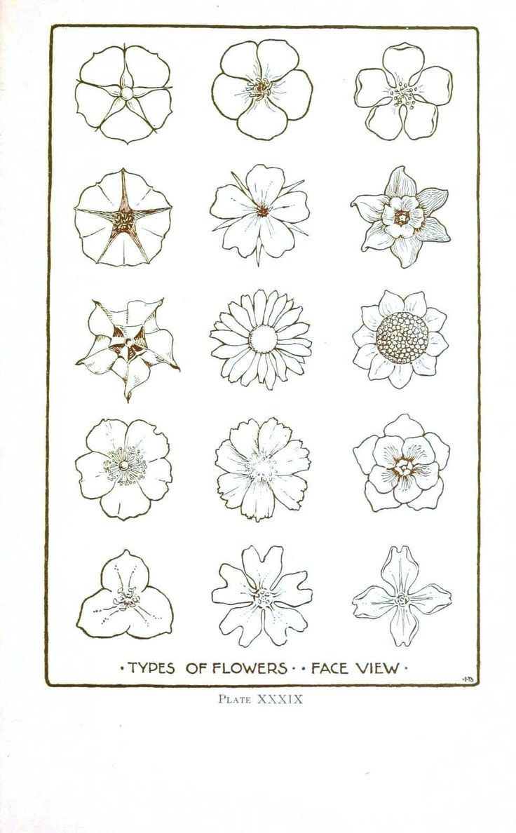 Best 25 flower line drawings ideas on pinterest flower Teach me how to draw a flower