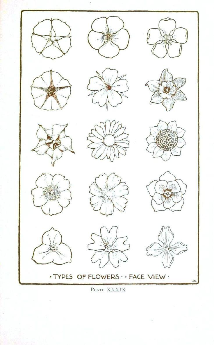 Vintage Printable at Swivelchair Media - Beta | Botanical – Flower – Flower line drawings 2